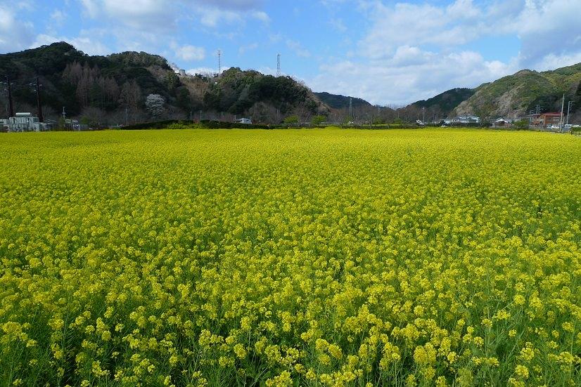 静岡・浜松のコワーキングスペース